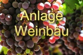 Anlage Weinbau